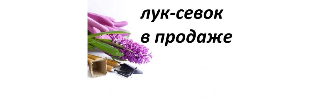 Лук-севок